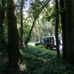 ...och plötsligt blev det nästan regnskog