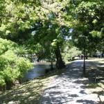 Vacker promenad längs Avon River i Christchurch