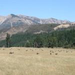 Vidsträckta betesmarker med får
