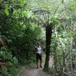 Regnskogskänsla på stigen ner till Tasman Bay